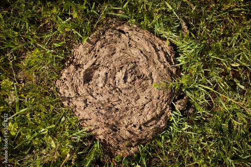 Cow dung lying on the grass