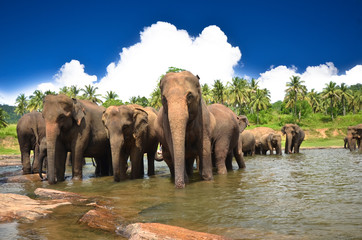 Young elephants playing in the beautiful landscape