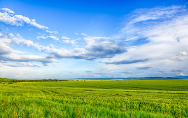 Beautiful landscape field of wheat, cloud and mountain