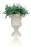 fern plant in a white pot