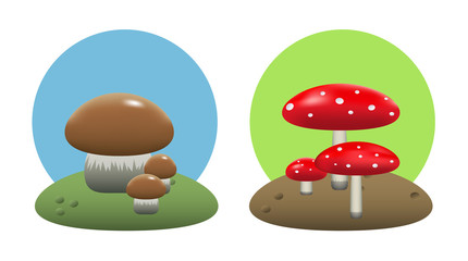 Edible and inedible mushrooms
