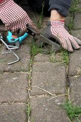 Gärtner jätet mit roten Handschuhen Unkraut