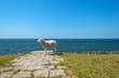 Sheep standing on top of a dam along a lake