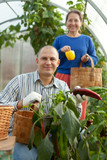Man and woman in vegetable plant