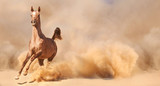 Arabian horse running out of the Desert Storm - 53101843