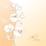 Orchid flower card