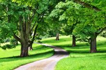 Aleja drzew z kręta droga przez