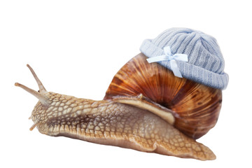 snail with Newborn baby knit wool hat