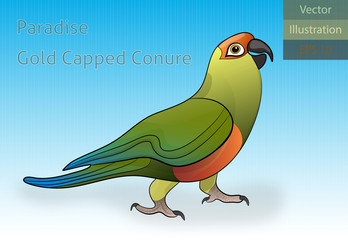 Paradise Gold Capped Conure Vector Illustration - EPS 10