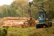 Abholzung - 53114890