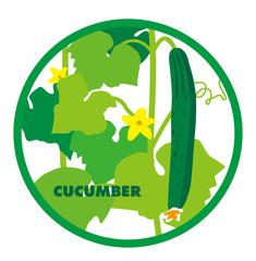 cuumber