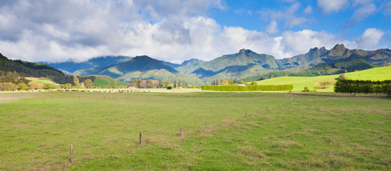 Coromandel Peninsula NZ mountain pasture scenery
