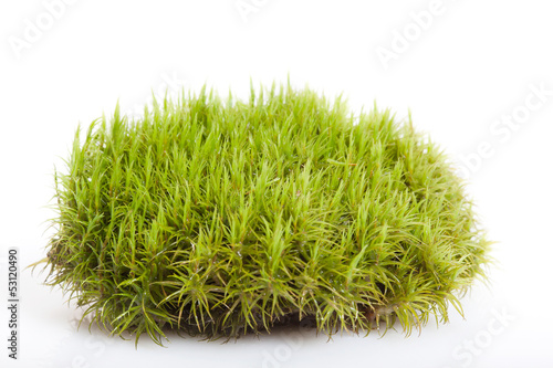 Moss in white background