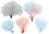 sea fan corals, vector set