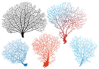 sea fan corals, vector set