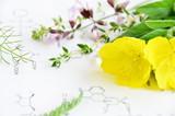 evening primrose and medicinal herbs