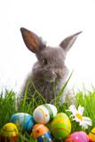 Fototapety osterhase mit eiern im gras
