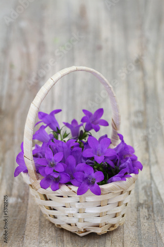 Campanula bell flowers in wicker basket with copy space