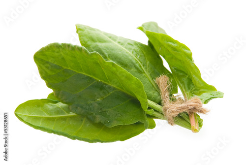 Sorrel isolated on white background