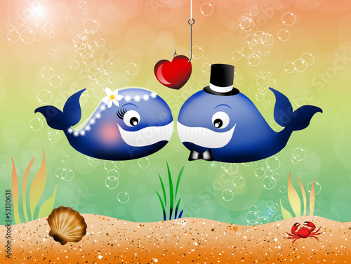 pair of whales in love