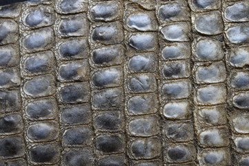 Dried snake skin and scales for textures or background
