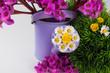Gießkanne mit frischen Blumen