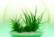 Growing Green - Air Plant Terrarium