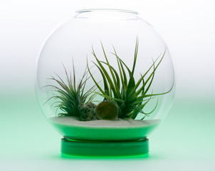 Green Growth - Air Plant Terrarium
