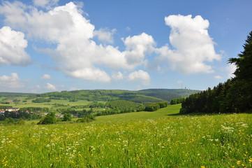 Bergwiese im Thüringer Wald