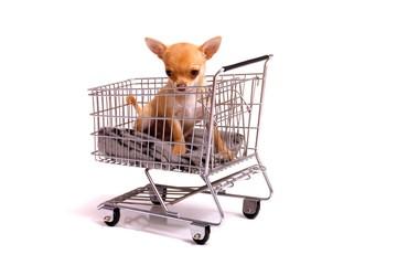 Welpe im Einkaufswagen