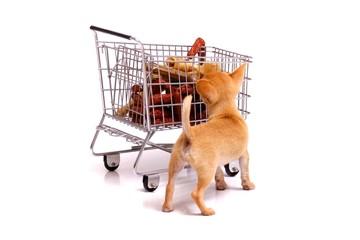 Welpe schaut in Einkaufswagen