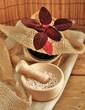 Amaranth mit Pflanze