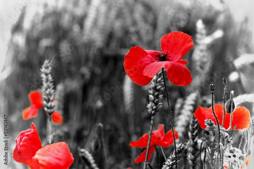 Foto op Canvas Poppy Poppy - For Remembrance Day