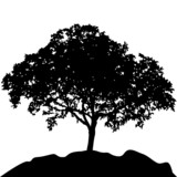 tree at hill silhouette vector