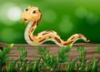 A snake above a wood