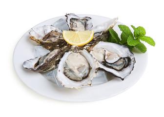 half a dozen oysters