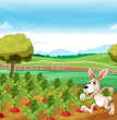 A bunny running in the farm