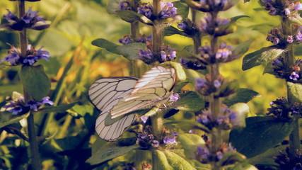 бабочки на полевых цветах