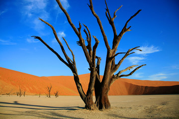 Dead tree in Sossusvlei