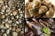 Crustacé - Coques  Moules  Bulots cuits