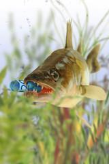 Fische 154