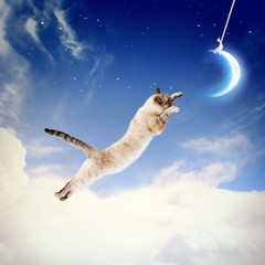 Cat catching moon