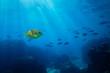 Tropical sea underwater shot