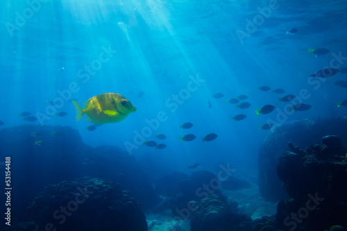 Tropical sea underwater shot