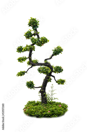 beautiful Tree isolated against a white background