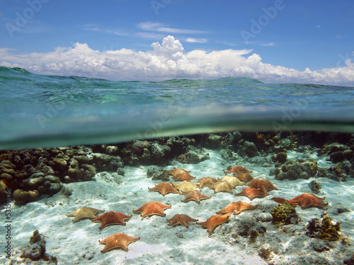 Split view with sky and underwater starfish