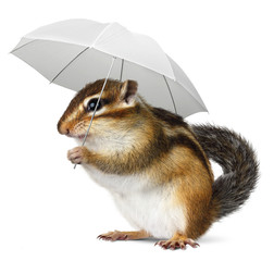 Funny animal with umbrella on white