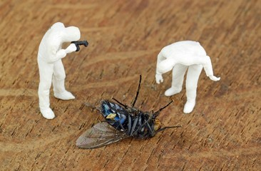 Miniature investigators photographing a dead fly