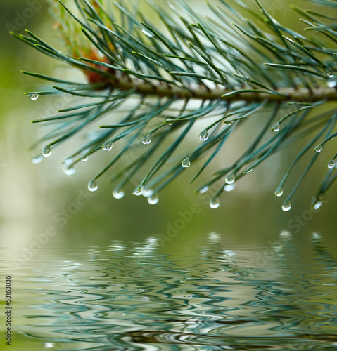 Fototapeta na wymiar Water drops on fir tree reflected in the water