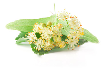 Linden flowers isolated on white background